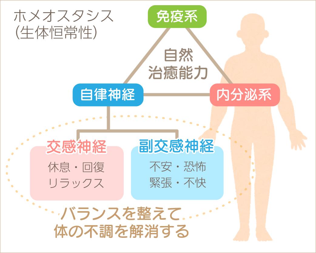 ホメオスタシスと体